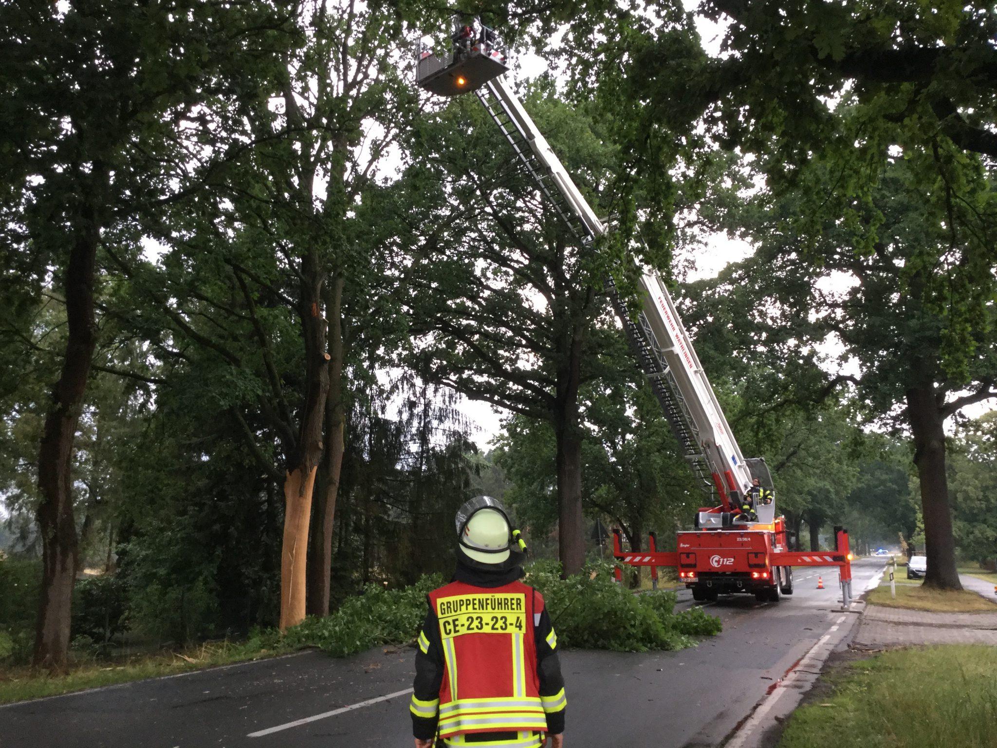 Baum durch Blitzschlag gepaltet